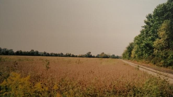 Laneway Field