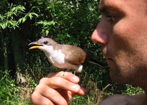 ben-cuckoo