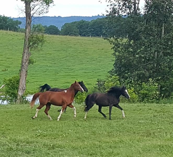 Three Wild Horses.jpg