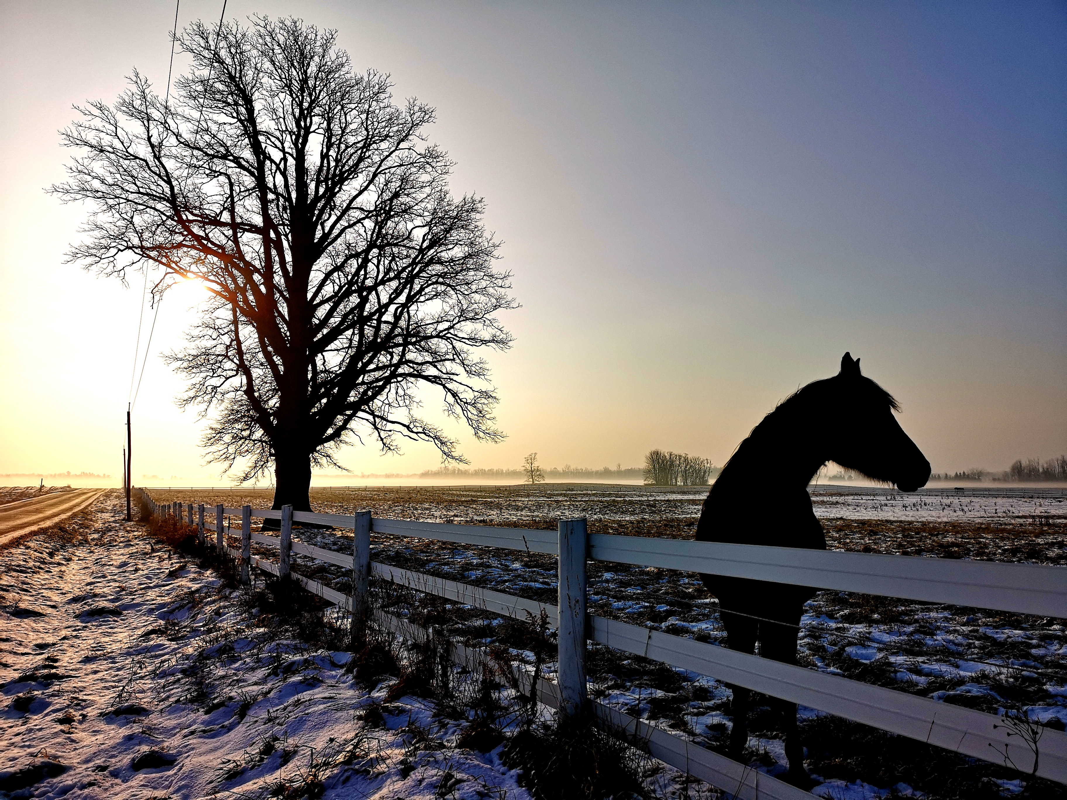 Ben Horse Shot.jpg